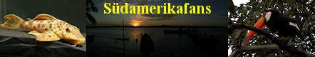 Informationen zu L-Welsen (Loricariidae), Dornwelsen (Doradidae) und Trugdornewelsen (Auchenipteridae). Tipps und Informationen aus der Aquaristik. Reiseberichte Südamerika.