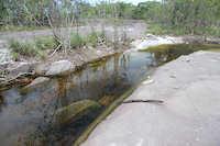 Bild 9: Habitat von Dekeyseria scaphirhyncha, ein Zufluss zum Rio Atabapo in Kolumbien