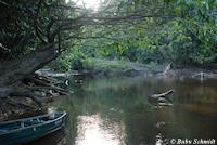 Bild 12: Habitat von Guyanancistrus brevispinis