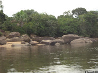 Bild 4: Río Vaupes, Habitat von Hypancistrus cf. inspector