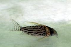 aqua-global-042018-s49