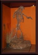 Fosil von Arctotherium sp.