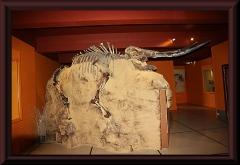 Fosil eines südamerikanischen Elefanten