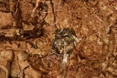 Kolibri-Nest
