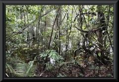 Das Ufer des Rio Carabinani im Galeriewald