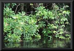 Auf der Dschungelwanderung am Rio Carabinani