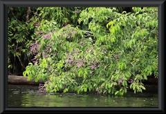 Am Rio Carabinani