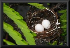 Das Nest hat einen Durchmesser von ca. 5 cm.