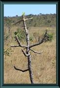 Viele angekohlte Bäume