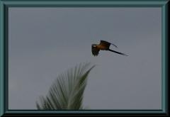 Brasilien_2013_04517