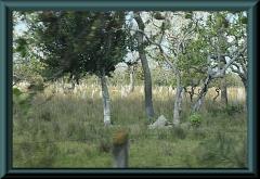 Jede Menge Termiten-Hügel