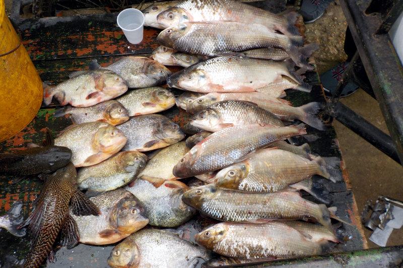Ware eines Fischers