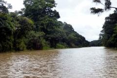 Igarapé zum Lago Gabriel