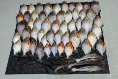 Eine Auswahl aus dem gesamten Fang bei Anori