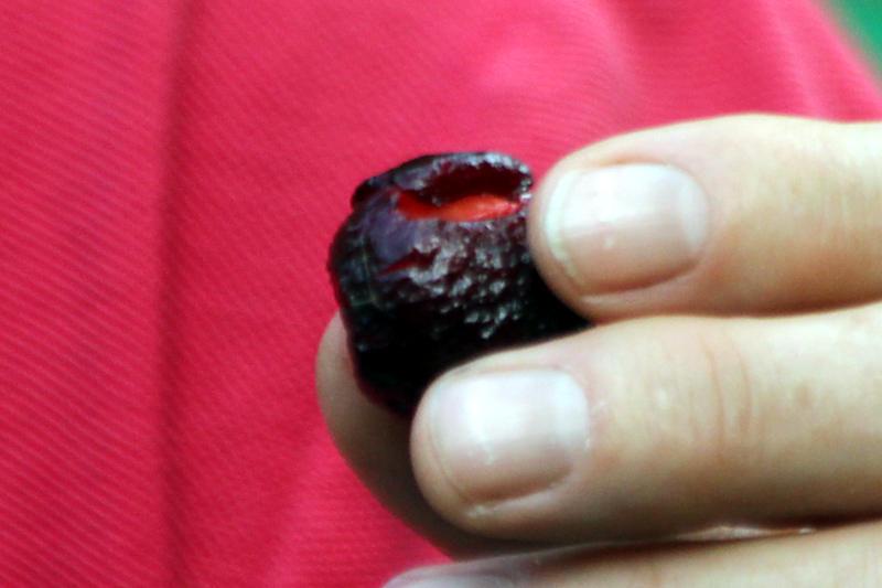 Jambolanapflaume (Syzygium jambolana)?