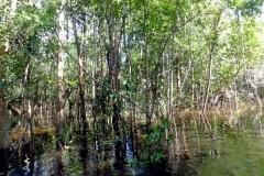 Der Igarapé im Wald
