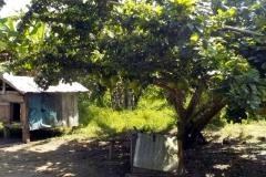 Calabase