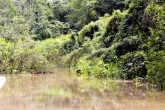 Rio Carapanatuba
