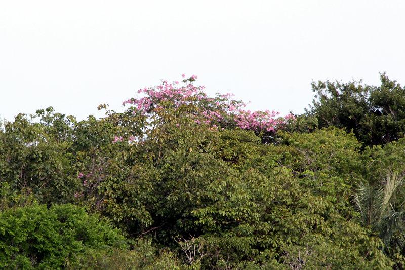 brasilien_2017_06202