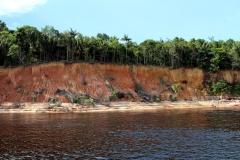 Ufer des unteren Rio Negro