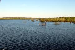 Am Rio Cuieiras