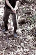 Dschungelwanderung am Rio Cuieiras
