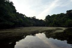 Am Rio Negro . Anavilhanas Archipel