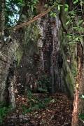 Am Fuss einer Ceiba