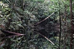 Igarapé Preto
