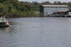 Novo Airão - Delfinvorführung