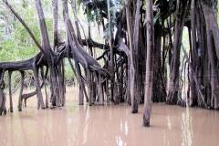 Die tausend Wurzeln eines Baumes