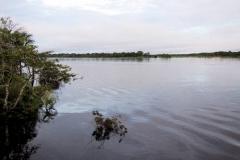 Rio Solimões bei Foz do Jutaí