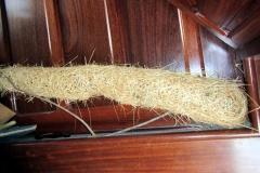 Nest eines Gelbrücken-Stirnvogels