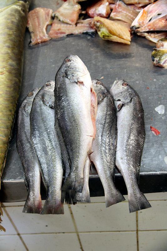 Süßwasser-Umberfisch - Plagioscion squamosissimus?