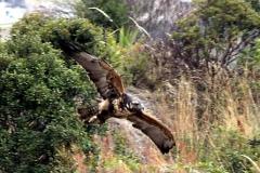 Otavalo: Parque del Condor