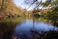 Ilmenau, Ritzebühler Teich