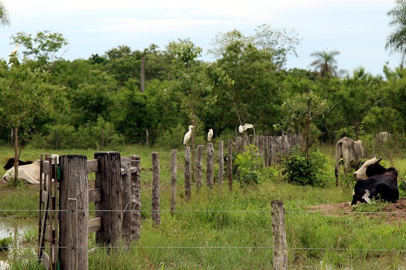 paraguay-06401.jpg