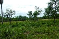 Nach San Carlos del río Apa - typische Landschaft