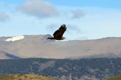 patagonien_2016_09307