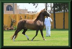Bei einem Pferdezüchter