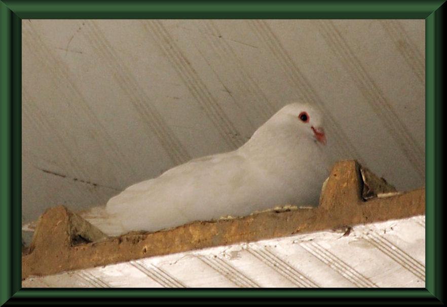 ... sicherlich ein Albino der vorherigen Art
