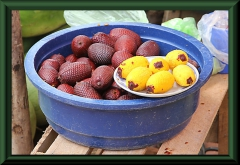 Aguaje: Früchte von Mauritia flexuosa (Moriche-Palme)