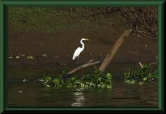 Am Río Yanayacu