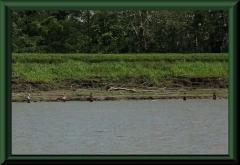 Angler am Amazonas