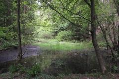 Teich im Lappengrund