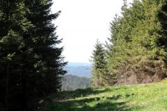 Blick zum Ringberg bei Suhl