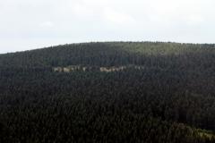 Schneekopf: Blick zum Großen Beerberg
