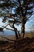 ... und Bäume, die sich daran festklammern