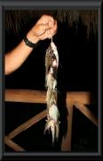Der abendliche Fischfang eines Indianers