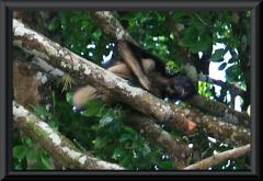 Der lodgeeigene Affe